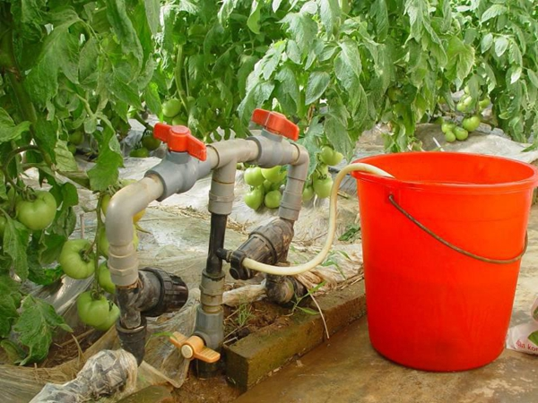用方法_液体肥料的施用方法